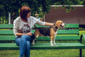how to make money without working a real job with pet sitting